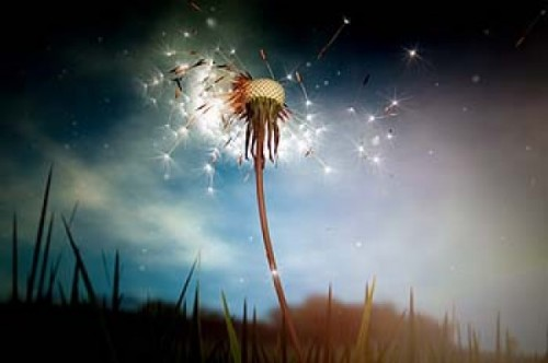 Interaction with the dandelion